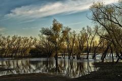 """""""Los árboles y sus reflejos"""" (Marcelo Savoini) Tags: losárbolesysusreflejos"""
