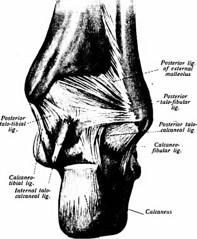 joints of pelvic girdle