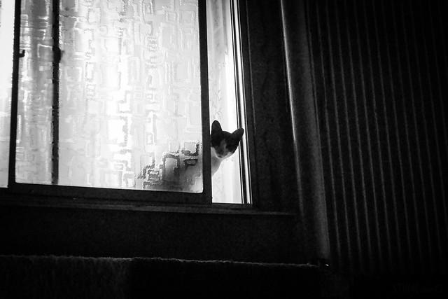 Today's Cat@2014-07-05