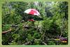 Silent Valley---------------08 (Binoy Marickal) Tags: india green tourism nature water rain kerala mala palakkad evergreenforest treaking silentvalleynationalpark nilgirihills mannarkkad mukkali kuzhur indiabinoymarickal