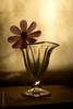 (koliru) Tags: flower color macro nature glass closeup canon garden studio ilovenature bravo quality f25 iloveit flickrpix abigfave