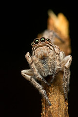 Words Unspoken (spintheday) Tags: macro nature insect bigeyes spider staring