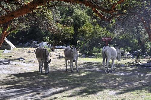 13-52-Donkeys