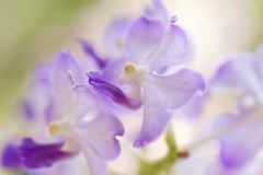 The Wonders Of life (Anna Kwa) Tags: flowers light macro art nature marina singapore orchids bokeh gardensbythebay annakwa theworldoforchidsgardentrail