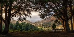 Amanhecer no Vale do Jaborandi (Waldyr Neto) Tags: landscape twilight paisagem amanhecer novafriburgo trêspicos parqueestadualdostrêspicos petp valedojaborandi