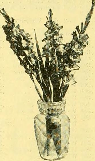 "Image from page 379 of ""The Florists"