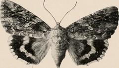 Anglų lietuvių žodynas. Žodis acrid reiškia a 1) (apie kvapą) aštrus, aitrus; 2) kandus lietuviškai.