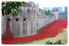 Poppies at the Tower of London (ec1jack) Tags: uk red england london castle ceramic britain poppy poppies greatwar fundraising toweroflondon cityoflondon worldwar1 kierankelly ec1jack canoneos600d