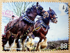 great stamp Great Britain 88p (dray horses, draft horses, Caballo de tiro, Koudbloedras, draught horses, Cheval de trait, Kaltblter, , Ko zimnokrwisty, Kallblodshst) UK United Kingdom postage stamps poste-timbres Grande-Bretagne sellos GB (thx for sending stamps :) stampolina) Tags: uk greatbritain england horses horse english animal animals postes caballo cheval unitedkingdom stamps porto penny british cavallo cavalo pferd postage postzegel franco granbretagna tier pence sellos grossbritannien drafthorses briefmarken markas  ko kaltblter selos timbres granbretaa francobolli drayhorses draughthorses znaczki chevaldetrait frimerker frimaerke sellodecorreo caballodetiro pullar   postestimbres postetimbres selodecorreio antspaudai znamk koudbloedras  kozimnokrwisty kallblodshst