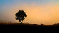 The Simple Things in Life (Photography Revamp) Tags: sunset plant tree silhouette fog
