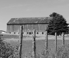 Old Barn (pegase1972) Tags: qc québec quebec canada estrie easterntownships barn grange bw fence explore explored