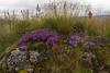 Gróður4 (Brynja J.) Tags: people nature grass stone moss enjoying blóðberg thymuspraecox peopleenjoyingnature