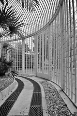 The Palm House, Bicton Park (stavioni) Tags: park house building glass gardens john garden botanical palm devon curved glasshouse claudius bicton loudon