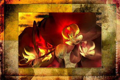 Orchids_1103_03-10-13-tewksbury-Edit-Edit-2
