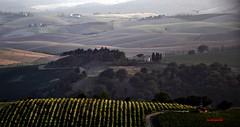 Tramonto al Ghiaccioforte (Jambo Jambo) Tags: sunset italy panorama landscape italia tramonto wine vineyards tuscany toscana grosseto vino maremma morellino morellinodiscansano scansano vigneti ghiaccioforte nikond5000 jambojambo vinomorellinodiscansano