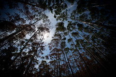 in the woods (paul.wienerroither) Tags: travel light sky cloud nature forest canon photography view ella lookingup co srilanka ellarock