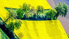 FRIBOURG REGION / Ref.AM044 (FRIBOURG REGION) Tags: summer schweiz switzerland suisse sommer feld t stimmung champ ambiance montgolfire heissluftballon arostier fribourgregion