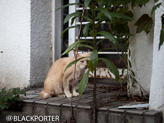 (blackporter01) Tags: cat canon  5dmark2 canonef100mmf28lmacroisusm