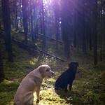 Tytöt metsässä thumbnail