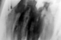 20140922 (zzkt) Tags: brussels blur monochrome bokeh bruxelles be brussel greyscale bruxxel iso160 brüsel 05sec f34 leicasummiluxm35mmf14asph leicam9 05secatf34