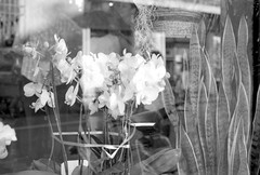 Flowers, reflections (Giuseppe_mat90) Tags: flowers bw white black reflection film analog 35mm 50mm delta olympus om10 400 f18 ilford zuiko