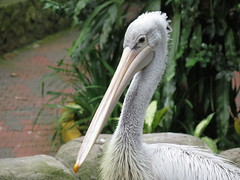 "Bird Park <a style=""margin-left:10px; font-size:0.8em;"" href=""http://www.flickr.com/photos/83080376@N03/15342060586/"" target=""_blank"">@flickr</a>"