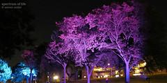 Spectrum of Life (Zee1977) Tags: pink blue trees light ontario canada building tree art grass technology purple spectrum riverside culture wave windsor leafs soldat zelimir