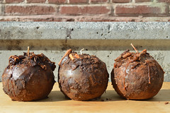 Absolutely Amazing Cinnamon Spice Sphere Pillar Candle Set - 4 Inch Ball Candles Smothered in Cinnamon, Cloves, and Lots of Spices (Everything Dawn Bakery Candle Treats) Tags: autumn ball candles candle cinnamon spice pillar sphere stick scent grubby scented everythingdawn