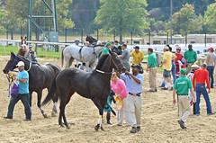 2014-09-18 (50) r5 horses return (JLeeFleenor) Tags: horses caballo cheval photography md photos uma maryland trainers cal jockey jinete cavallo cavalo pferd equestrian kuda alogo equine hest thoroughbreds soos hevonen cuddy paard cavall kon koin laurelpark  jokey fantino hst ceffyl  jquei  ko faras hestur  perd ngi  konj    capall beygir horsepeople yarraman dokej rennreiter  pfeerd marylandhorseracing trackpeople laurelracecourse marylandracing   okej kilparatsastaja jocheu