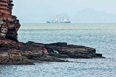 Shell picking 2 (Chrisseee) Tags: blue sea seascape rocks outdoor bluesky kohlanta andamansea savetheplanet shellpicking egat seagipsy nocoal sangau protectkrabi nocoallanta krabinocoal lantanocoal andamannocoal sementboats