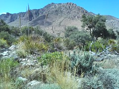 Guadalupe Mountains National Park Texas.  15 June 2015 (ov.black) Tags: park cloud mountain storm mountains clouds nationalpark texas tx lg smartphone guadalupemountainsnationalpark guadalupemountains approachingstorm stormcoming stormapproaching lgsmartphone lgoptimus lgms659