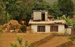 NEPAL, Fahrt nach Pokhara, Farmerhaus, 15215/7918 (roba66) Tags: rice terassen ricefields ernte erntezeit reislandwirtschaft farm bauern farmer reisen travel explore voyages roba66 visit urlaub nepal asien asia südasien landschaft landscape paisaje nature natur naturalezza plants pflanzen colores color colour coleur