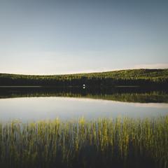 (DrowsyPotato) Tags: sony ilce7rm2 fe 35mm f14 za mårdsjön nature sweden natur water summer