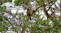 J78A0107 (M0JRA) Tags: rspb oldmoor birds lakes woods walks trees ponds fields grass hedges foot paths