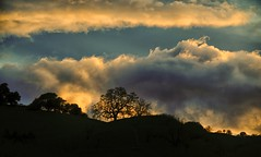 and the voice of God called to him... (Alvin Harp) Tags: sunset cottonclouds treesilhouette mountaintop napa california february 2017 sonyilce7rm2 fe24240mm i80 alvinharp