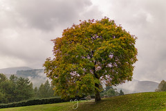 misty Autumn morning in Tullymore Forest Park (Pastel Frames Photography) Tags: tullymore forest park northern ireland mist morning mountains autumn nature tress walking hiking colours clouds fog green