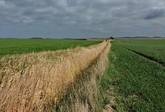 *** (Wunderlich, Olga) Tags: rügen insel deu landschaft gras grün linie baum himmel natur landschaftsbild naturaufnahme mecklenburgvorpommern