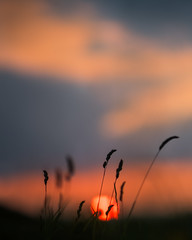 Dusky Glow (Ida H) Tags: silhouette silhouettes grass summer sun sunset glow dusk nature sky orangesky orange blue orangeandblue complementarycolours shallowdof peaceful calm dreamy colour dark lowlight lowsun