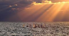 Little sailboats at Sunset - Tel-Aviv beach (Lior. L) Tags: littlesailboatsatsunsettelavivbeach little sailboats sunset telaviv beach littlesailboatsatsunset telavivbeach clouds sailing
