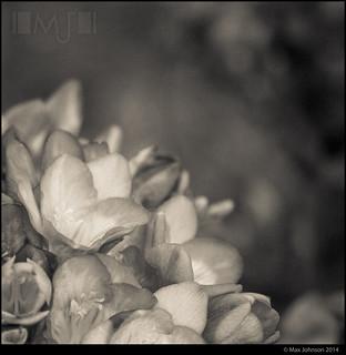 Ghostly Garden: Petal Pile