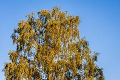 Tree (stephanrudolph) Tags: uk england plant flower nikon europa europe gb handheld polarizer 70200mm 70200mmf28gvr 70200mmvr d700
