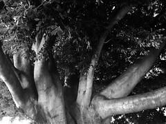 (Vallelitoral) Tags: park street old blackandwhite bw naturaleza tree cute love blancoynegro apple nature vintage hojas arbol nice amor bn retro árbol iphone flickraward vsco iphonegraphy vscofilm vscocam