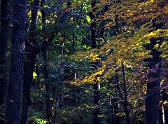 Fall Woods 02 (sdwat54) Tags: flowers sunset arizona sky fallleaves snow flower barn forest butterfly blackcat virginia waterfall rainbow cabin woods timber fallcolors butterflies sunsets sumac painteddesert bumblebee ridge westvirginia waterfalls monarch cascades falcon coneflower wyoming rainbows tetons wintersnow bumblebees honeybee anasazi mapleleaves oldbarn honeybees monarchbutterfly yellowbutterfly anasaziruins barnwood canyondechelley abandonedcabin yellowbutterflies tenantcabin fallforest blackmorphosbutterfly