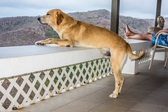 "Monty enjoying the view • <a style=""font-size:0.8em;"" href=""http://www.flickr.com/photos/91306238@N04/14595069743/"" target=""_blank"">View on Flickr</a>"