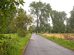 Urdenbacher Kmpe Juli 2014 (KL57Foto) Tags: trees summer nature pen germany sommer meadows olympus dsseldorf rhineland rheinaue ep1 aue 2014 auenlandschaft floodplain urdenbach baumberger urdenbacherkmpe kmpe urdenbacher kl57foto dsseldorfurdenbach