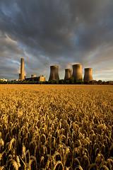 .... (Digital Diary........) Tags: uk nature golden wheat farming harvest crops powerstation runcorn merseyside fiddlersferry goodlight