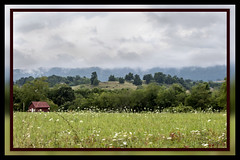 Painterly View of Wild, Wonderful West Virginia (Explored) (Carolyn Lehrke) Tags: usa nature rural artistic framed scenic explore wv photograph nikond3200 wildwonderfulwestvirginia painterlyeffect ilobsterit