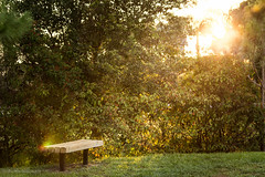 IMG_8541.jpg (Austin Whisnant) Tags: park sunset nature bench florida lensflare wellington flare southflorida villagepark austinwhisnant austinwhisnantphotography