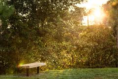 IMG_8541.jpg (Austin Whisnant) Tags: park sunset nature bench florida lensflare wellington flare southflorida villagepark austinwhisnant austinwhisnantphotography