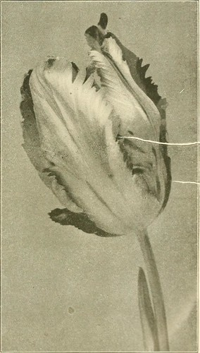 "Image from page 17 of ""Farquhar's autumn catalogue : 1913"" (1913)"